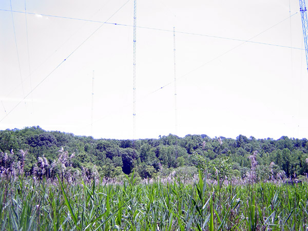 five tower directional AM tower array in a tidal swamp