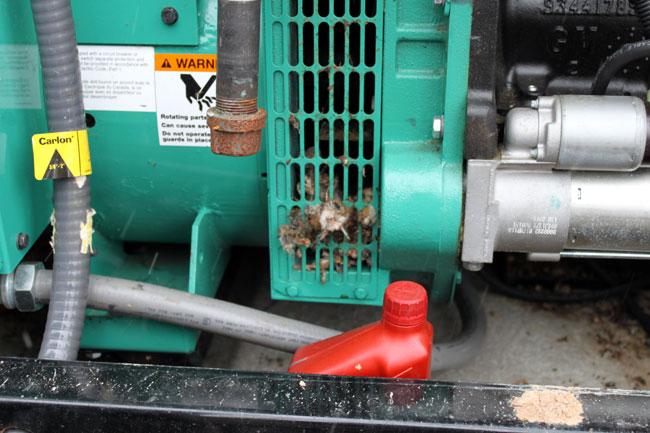 Onan generator mice