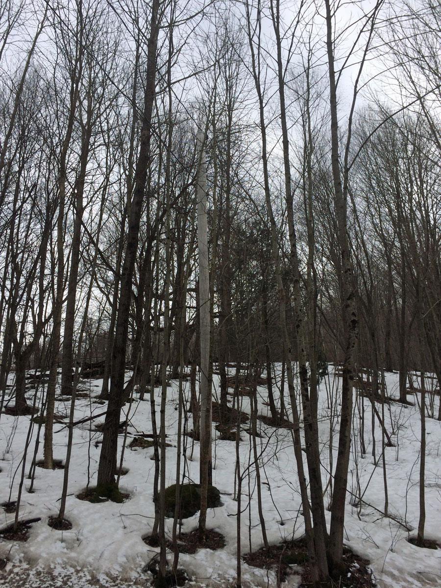 trees-on-line