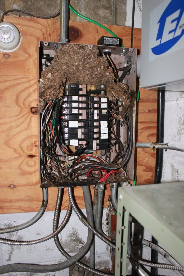 Mouse infested power panel, remote transmitter site