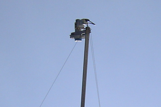 satellite feed horn with insect cover