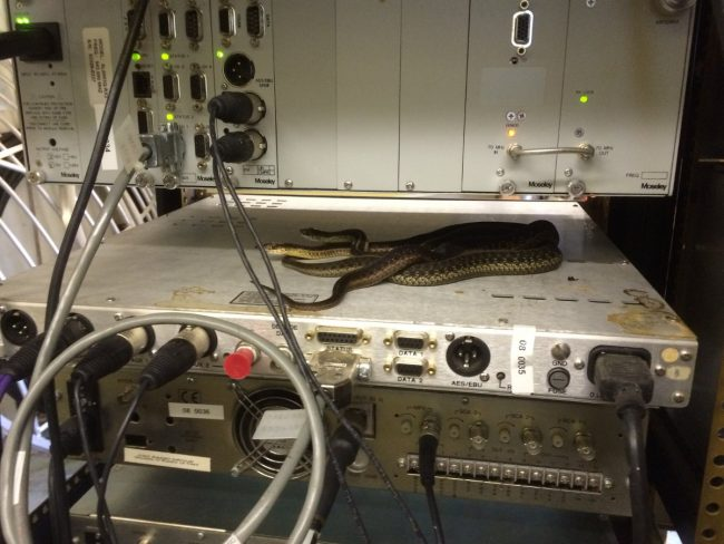 Cool morning, Garter Snakes warming themselves on top of a Moseley DSP-6000